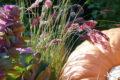 Courges et graminées©Parc Floral de La Source, Orléans-Loiret
