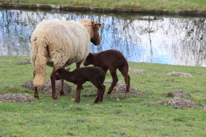 Domaine du Ciran Moutons
