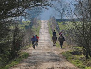 Horse-and-Bike