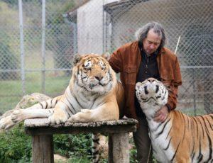 Rémy et ses 2 tigres hiver