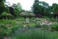 Roseraie du Parc Floral de la Source, Orléans-Loiret_rosiers roses et pergolas©Parc Floral de la Source, Orléans-Loiret