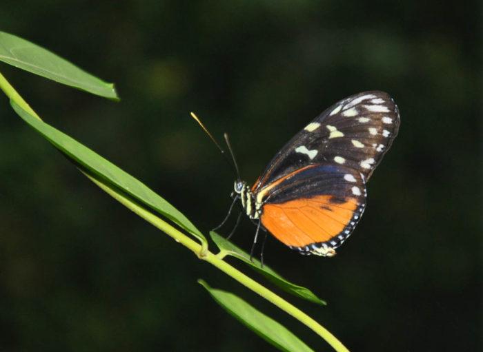 Serre aux papillons_2©Parc Floral de La Source, Orléans-Loiret
