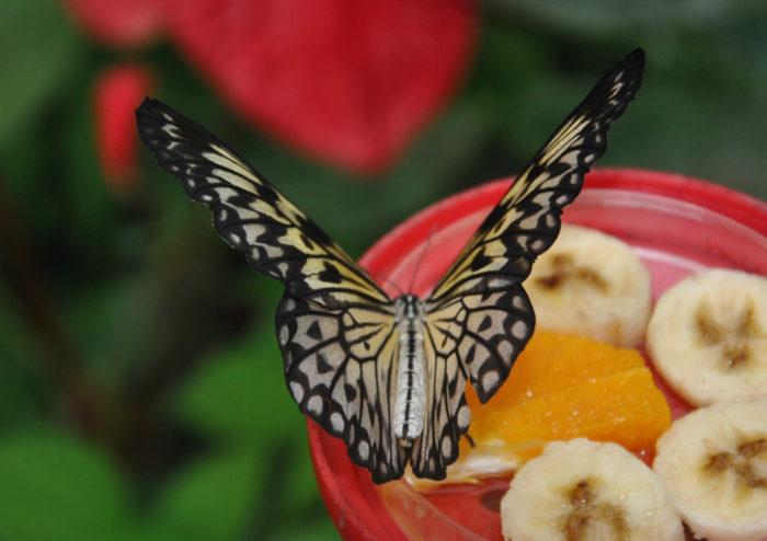 Serre aux papillons_5©Parc Floral de La Source, Orléans-Loiret