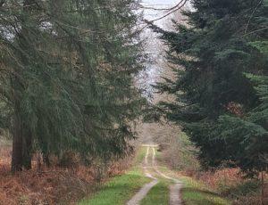 échappées forestière