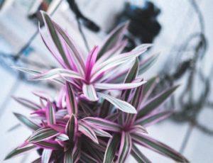 plant-791053_960_720